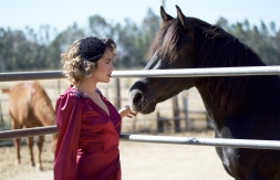 black horse with red dress